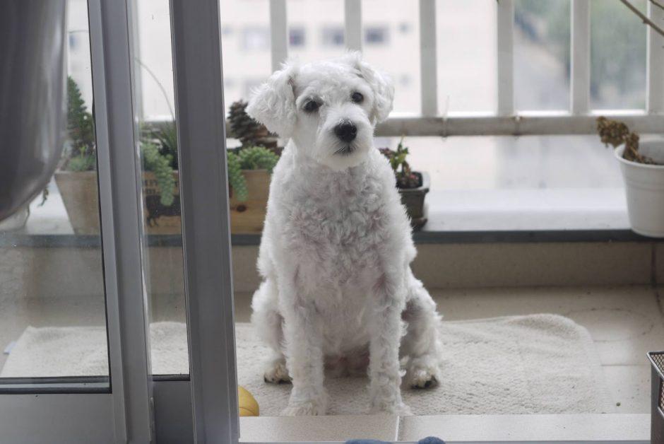 5 tipos de cães ideais para quem vai morar em apartamento